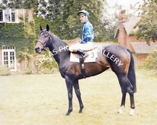 Fair Selina with Greville Starkey (662-01b)